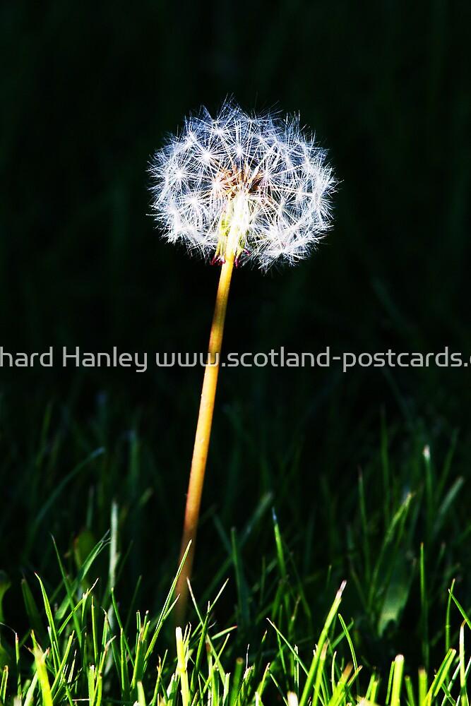 The Dandy by Richard Hanley www.scotland-postcards.com