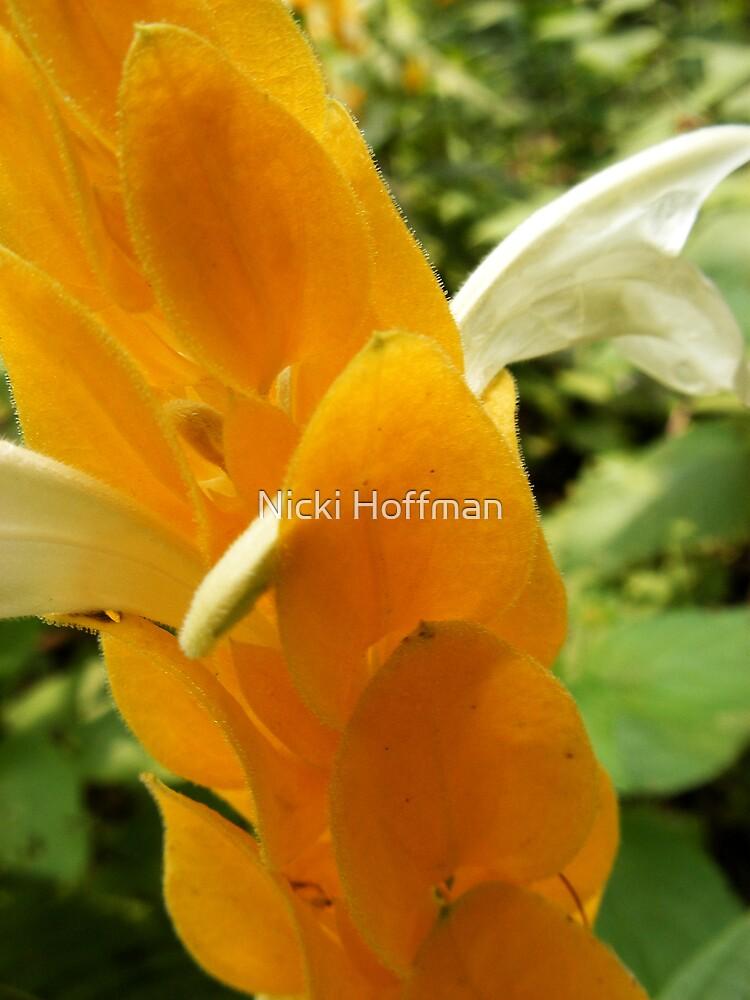 Golden Shrimp Plant by Veronica Hoffman