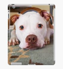 The American pit bull terrier of a dog lying on the floor iPad Case/Skin