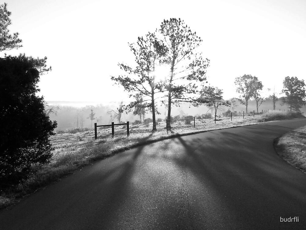 morning shadows by budrfli