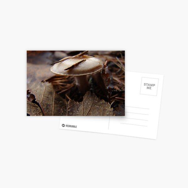 Monotone Miniature Postcard