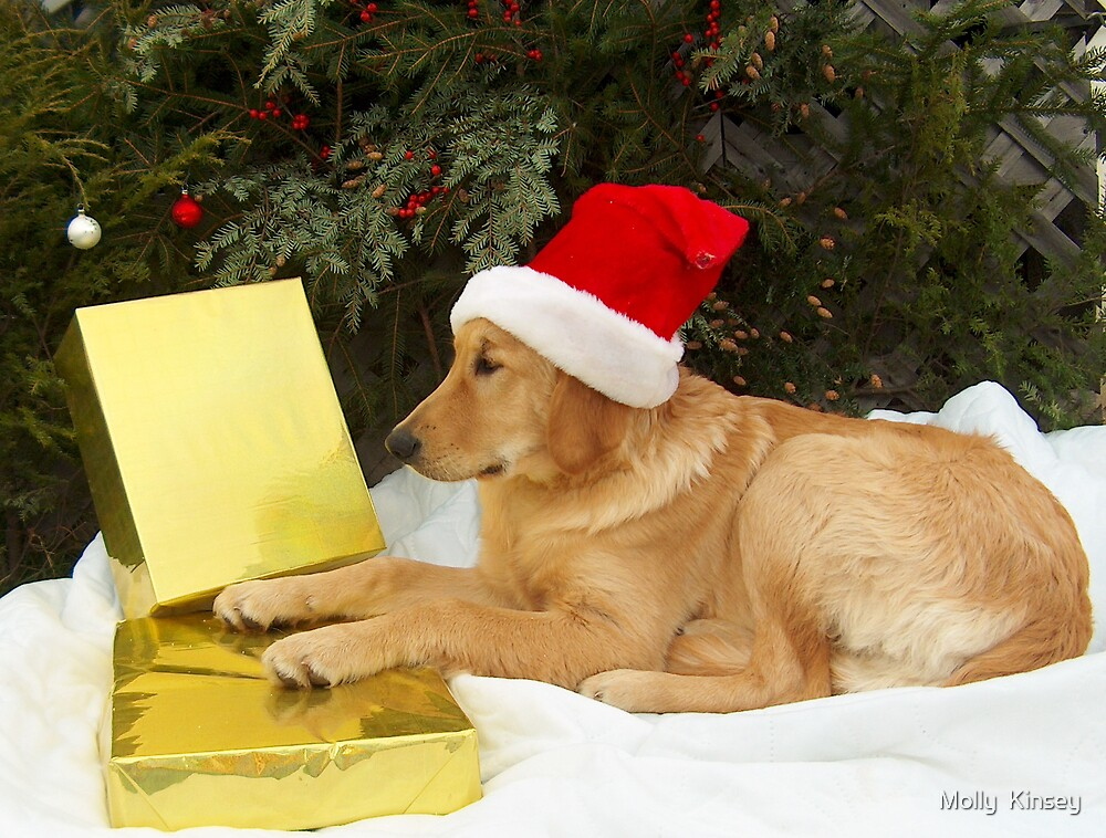 Puppy's Wish List by Molly  Kinsey