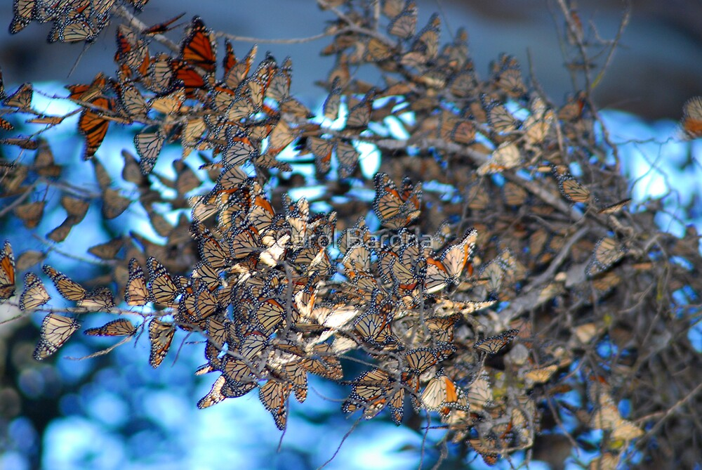 Butterfly Branches by Carol Barona