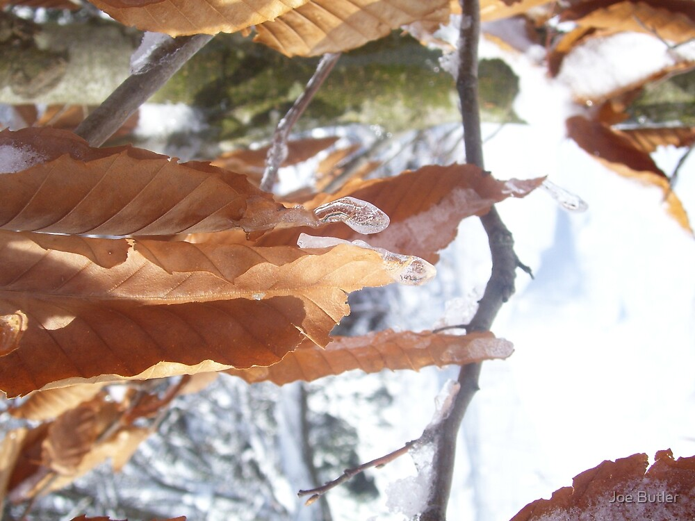 Ice and Leaves by Joe Butler