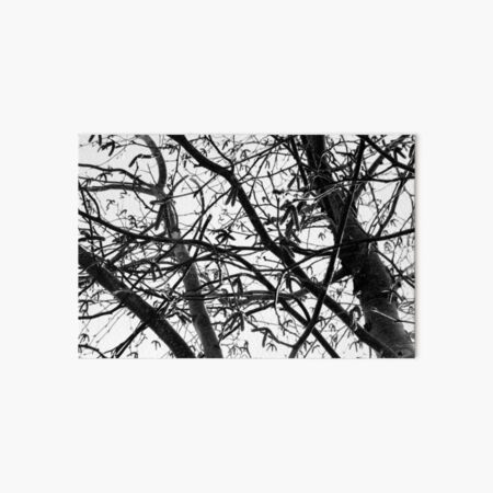 Black and White Forest Photograph Art Board Print
