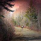 Moose At Sunrise 2 by Gene Cyr