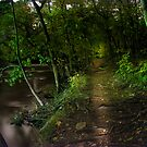 Into the Woods by LizzieMorrison