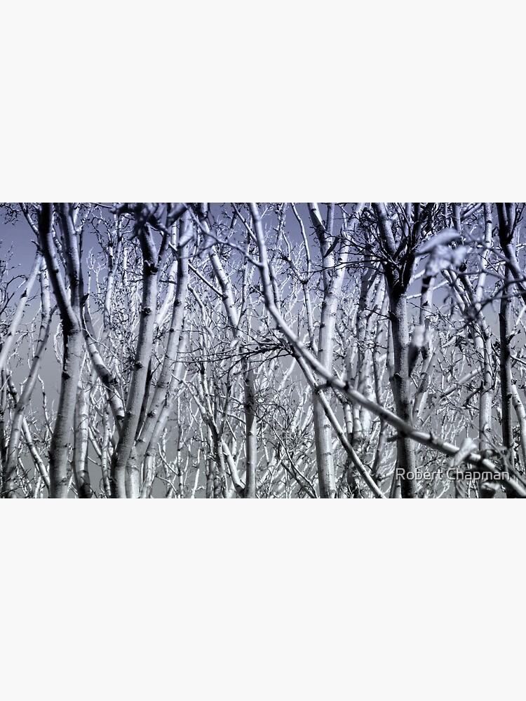 Hoher Kontrast Wald Foto von Zemus101