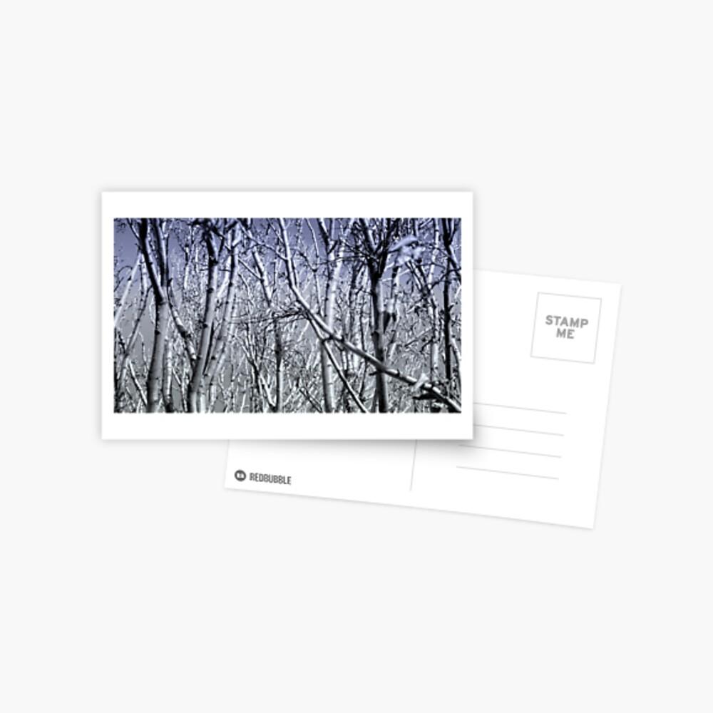 Hoher Kontrast Wald Foto Postkarte