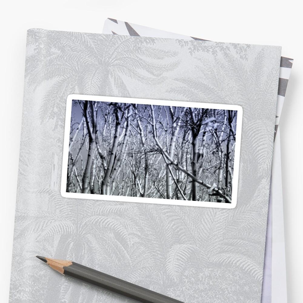 Hoher Kontrast Wald Foto Sticker
