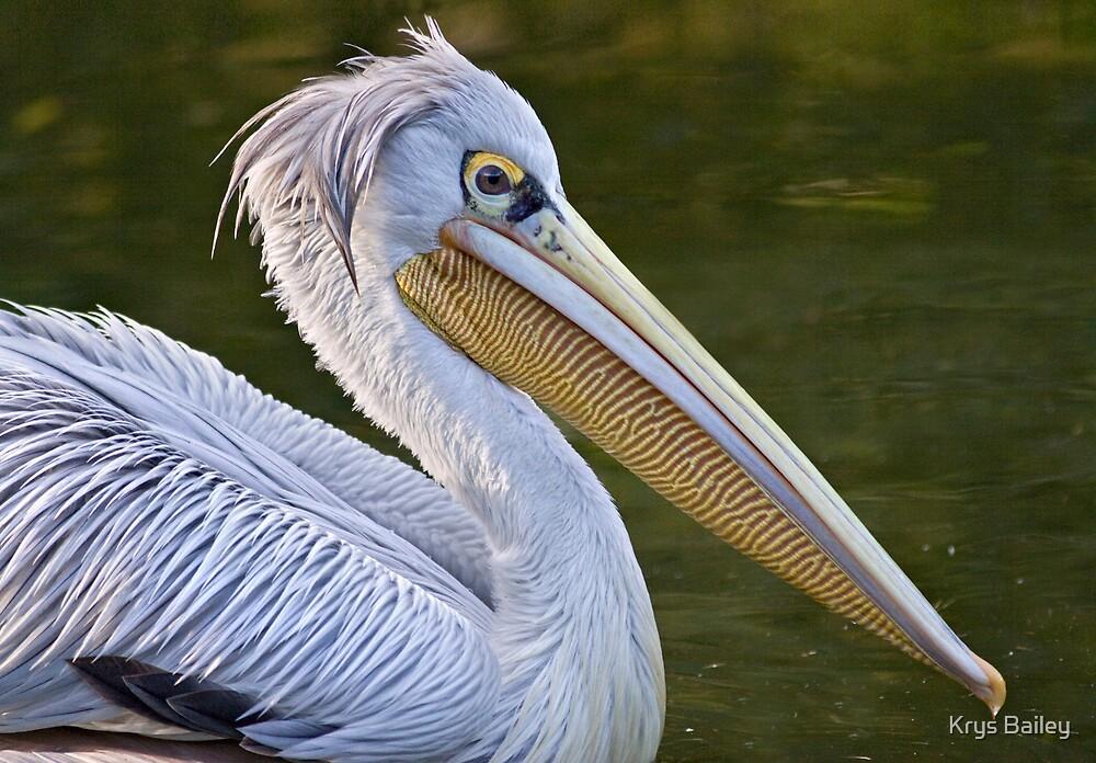 Punk Pelican by Krys Bailey