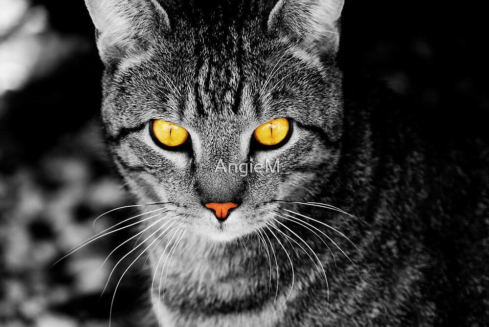 On Cat Watch by Angie Tirado