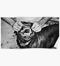 Forcella Dog Picture Poster