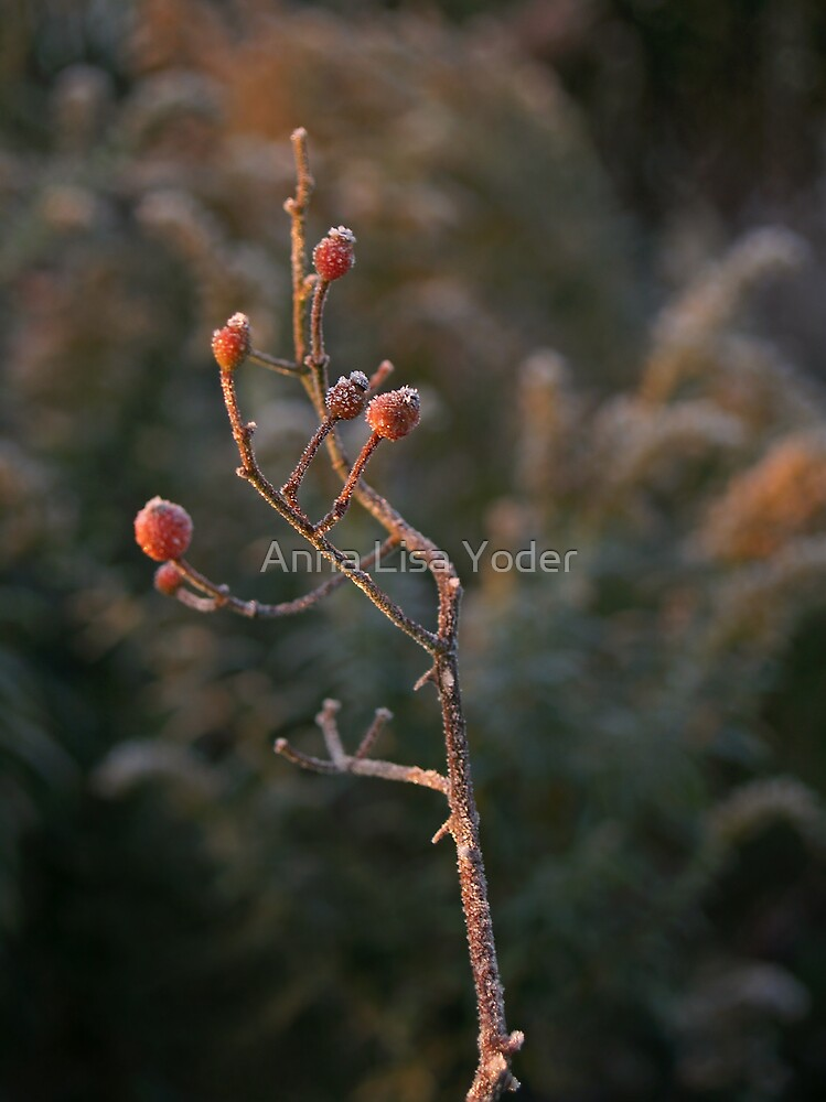 Early Morning Frost on Hawthorn by Anna Lisa Yoder