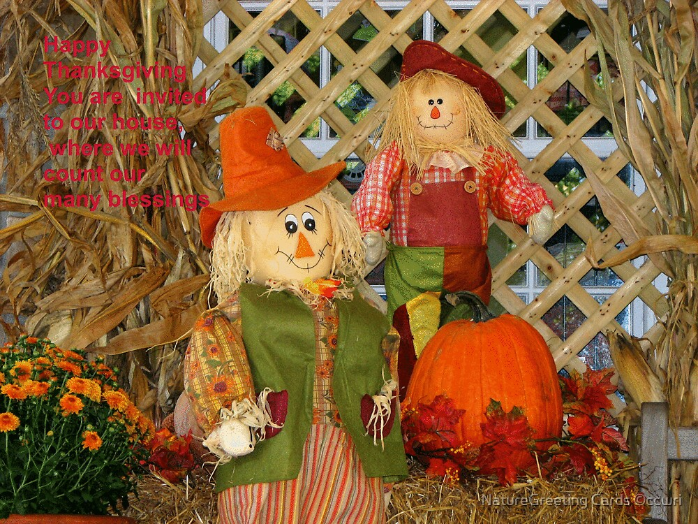 Thanksgiving Scarecrow by NatureGreeting Cards ©ccwri