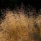 Sun on the Grass by kernuak