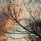 Tree Silhouette by kernuak
