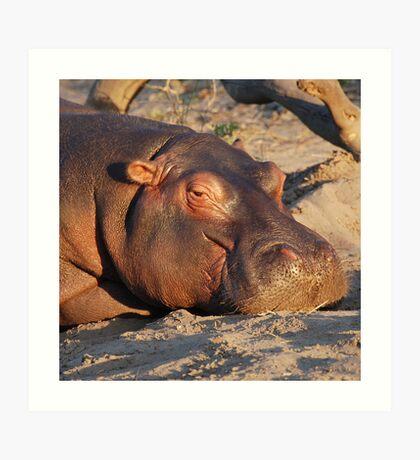 Contented Hippo, Chobe National Park, Botswana Art Print