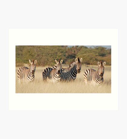 Zebras,  Leroo-La-Tau , Botswana, Africa  Art Print