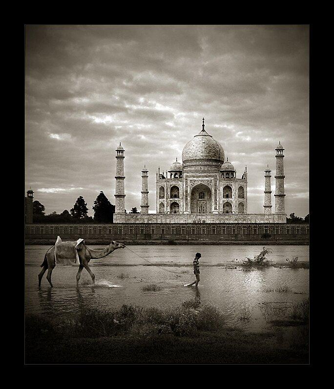 Taj Mahal - Boy & Camel by Thamer Al-Tassan
