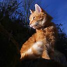 Ginger cat in garden at night by turniptowers