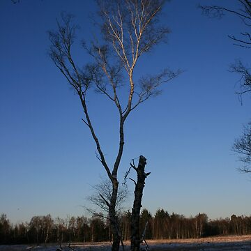 winter birch by Maitochter