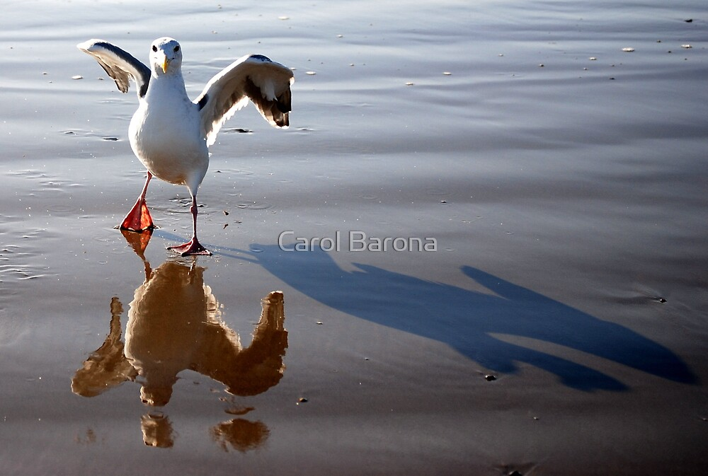 STOP TAKING OUR PICTURES!!!  by Carol Barona