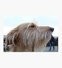 Dog Picture Photographic Print