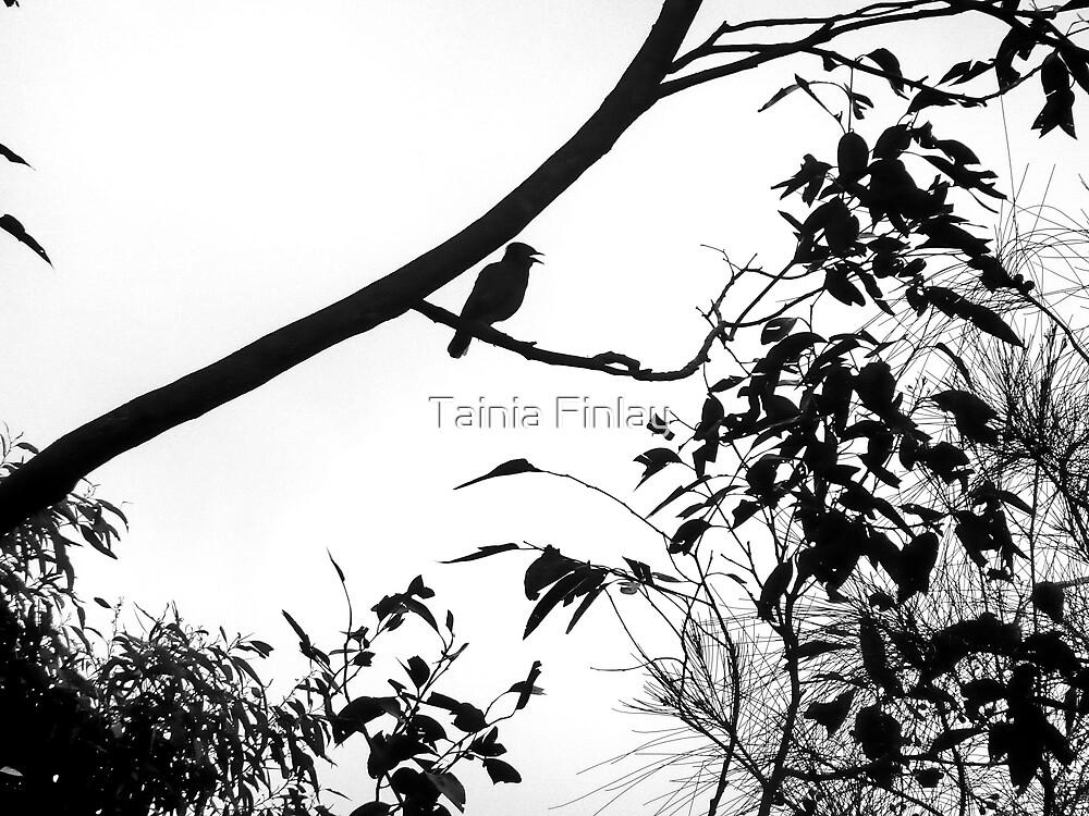 Dawn Music by Tainia Finlay