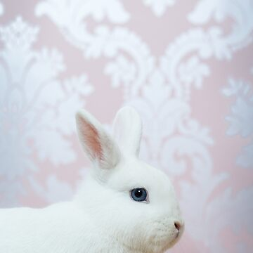 The White Rabbit by Penel