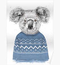 Winter Koala Poster
