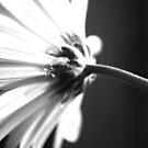 Awakening by Terri~Lynn Bealle