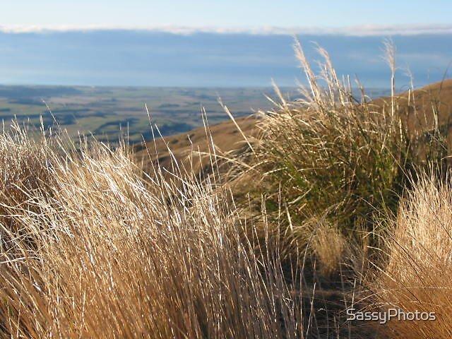 Grassy depth by SassyPhotos
