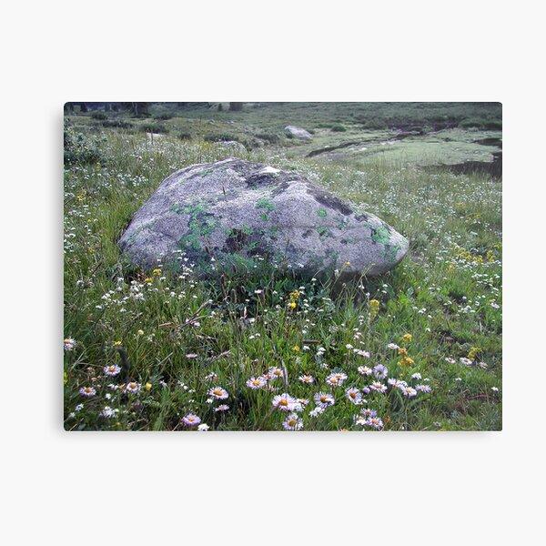 Wildflowers in Colorado Metal Print