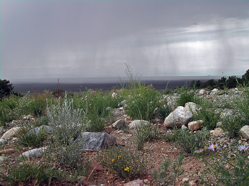 Storm in the Great Basin Desert by Patricia Bolgosano