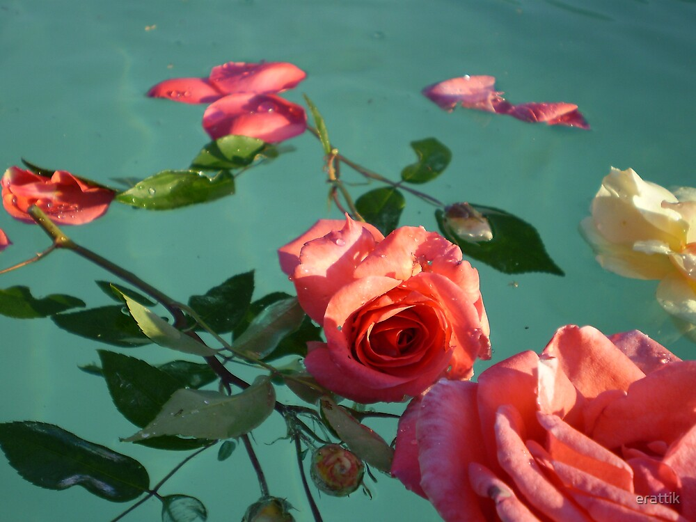 floating beauty by erattik