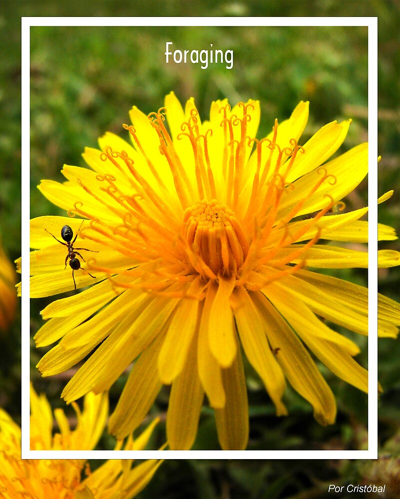 Foraging by www4gsus