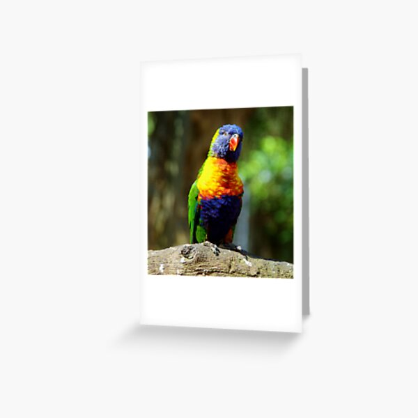 Colourful Lorikeet  Greeting Card