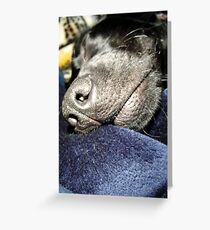 Sleeping Lab Greeting Card