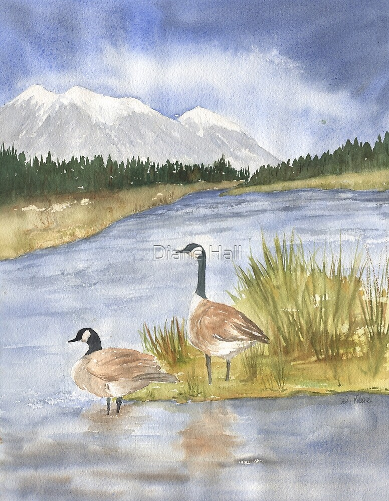 Canadian Geese- Madison River by Diane Hall