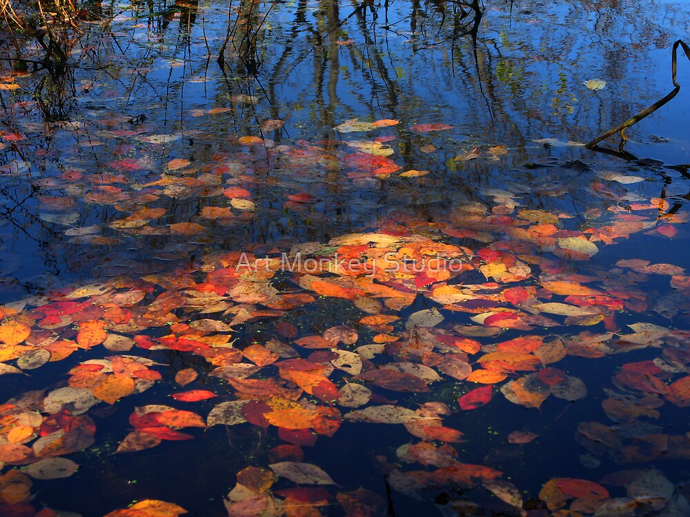 Floating Leaves by Dan Perez