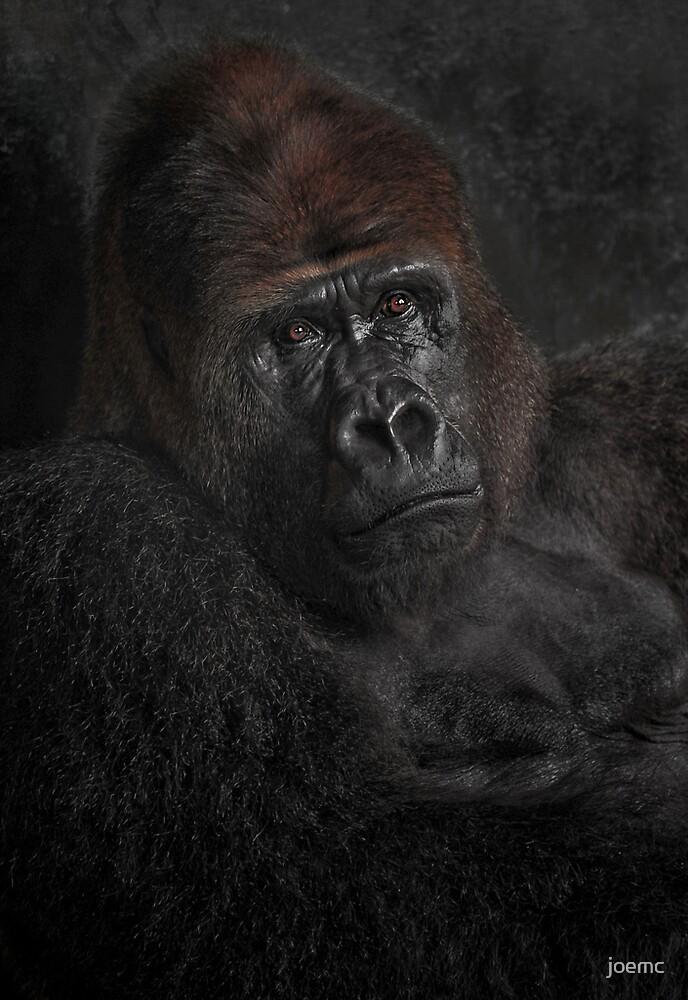 Dark and beautiful.....Silverback by joemc