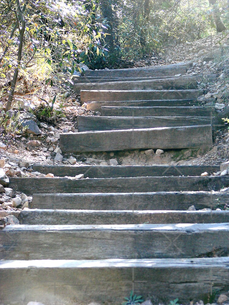 steps to nature by Kimberly Miller