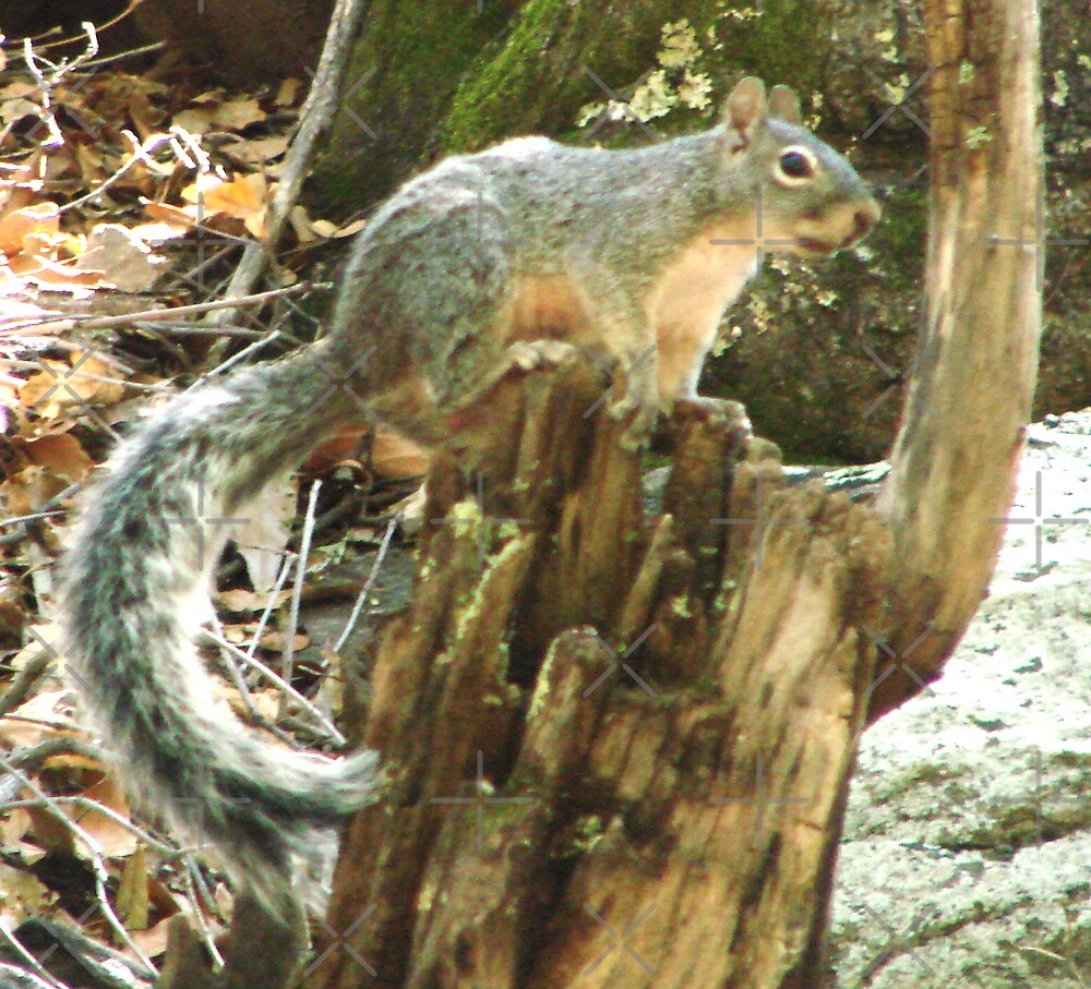A Little Squirrely by Kimberly Miller