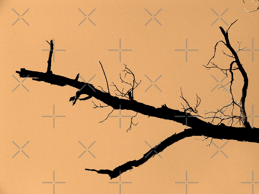 Branch against Orange Sky by Kimberly Miller