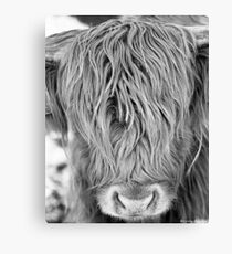 Highland Cow - Face Portrait Canvas Print