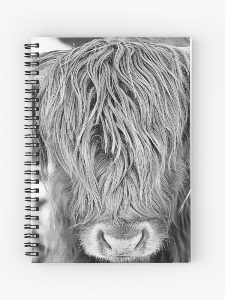 Highland Cow - Face Portrait | Spiral Notebook