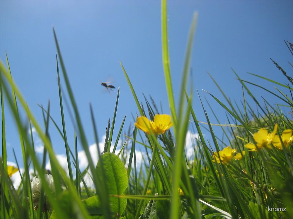 Bee in buttercup field by knomz