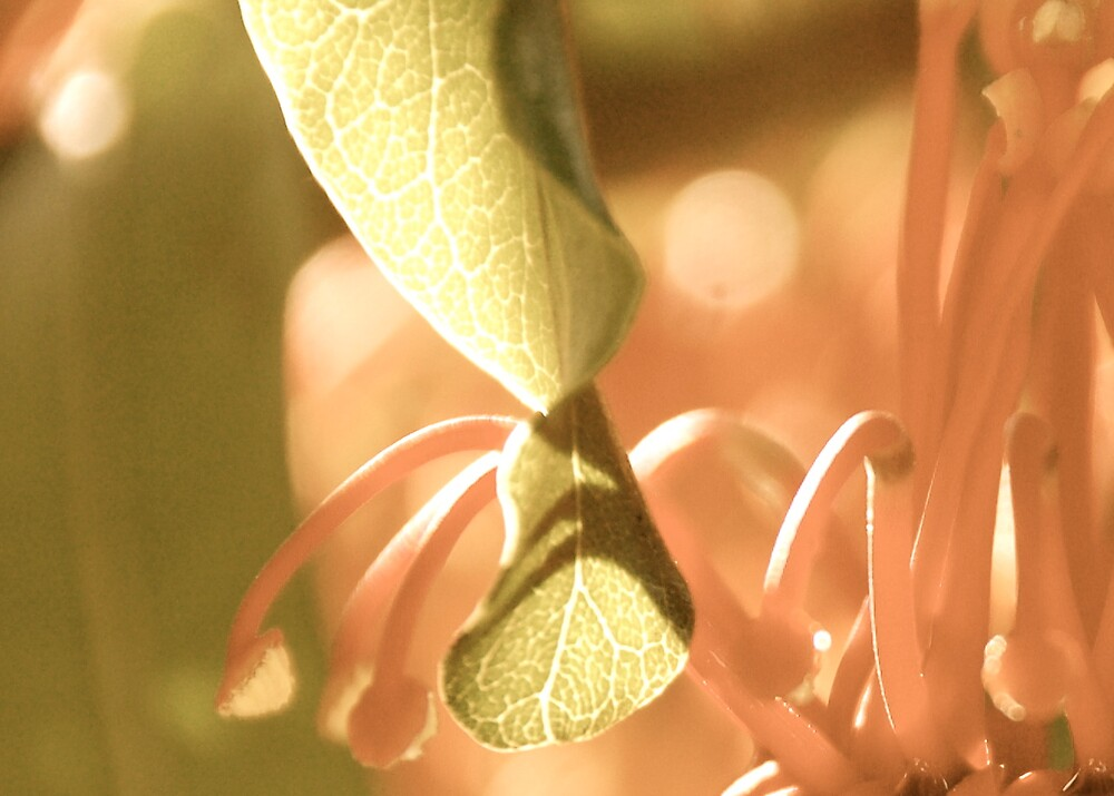 Abstract leaves by pulsdesign