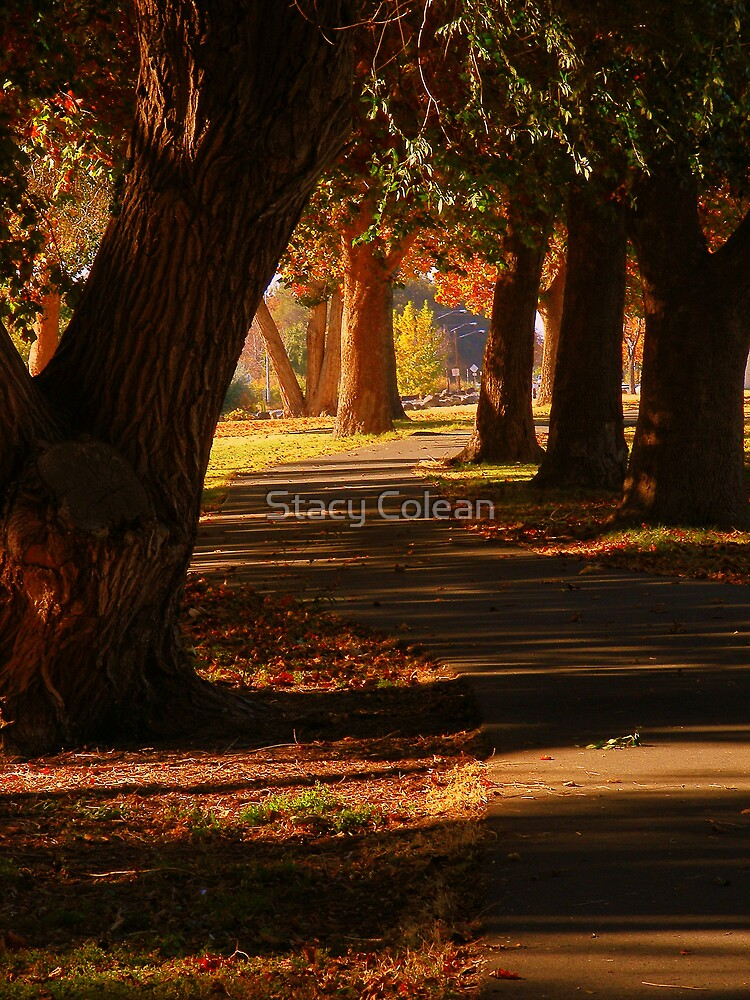 The Park by Stacy Colean